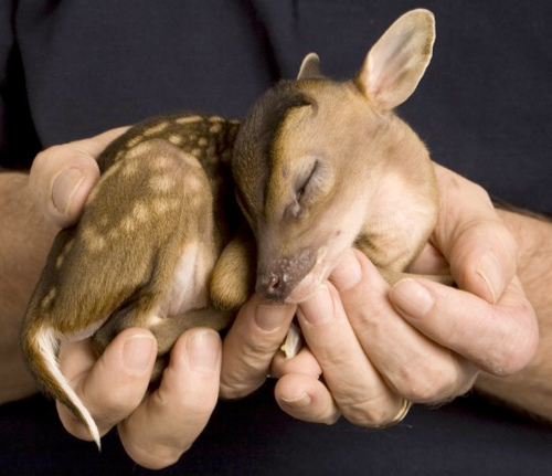 animal-baby-bambi-cute-sleep-favim-com-278196